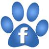 Facebook - Serafina Cane Corso